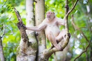 macaco na natureza foto