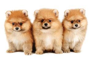 cachorros foto