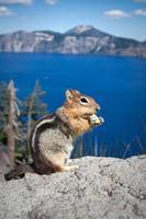 esquilo americano foto