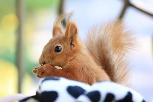 pequeno esquilo bebê sentado e comendo sementes foto