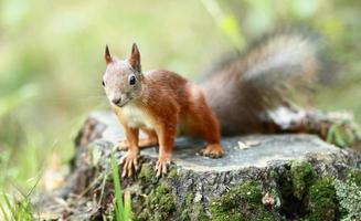 esquilo no parque foto