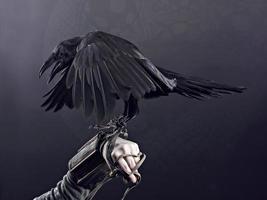 corvo corcunda foto