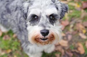 retrato de cachorro