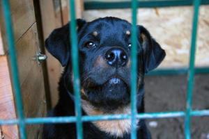 cão triste prisioneiro foto