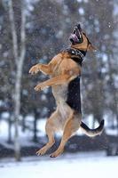 cachorro pulando foto