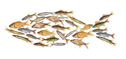 peixe de água doce composto isolado no branco