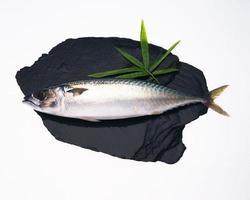 peixe foto