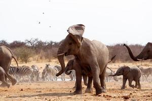 elefante bravo na frente ouvido