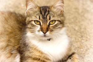 gato mente e olha foto