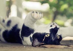 gato deitado de costas foto