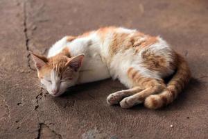 gatos foto