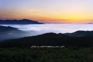 ovelhas no crepúsculo na montanha saibi