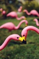 flamingos cor de rosa do gramado