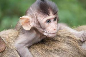 macacos mãe e filho foto