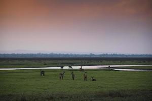 pôr do sol sobre o parque nacional da gorongosa foto