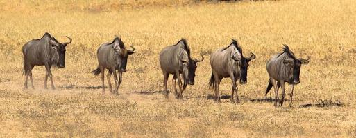 GNU andando na fila