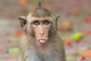 macacos bonitos foto
