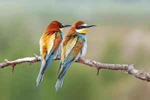 casal colorido foto