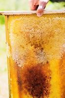 quadro com cera de abelhas