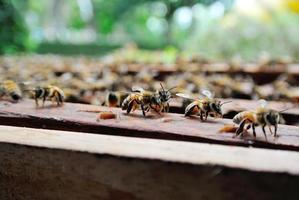 favo de mel por humano feito em madeira foto