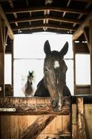 retrato de cavalo em estábulo aberto foto