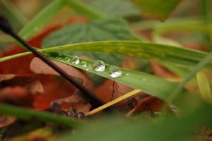 gotas de água na grama verde foto