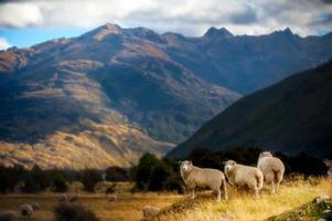 paisagem montanhosa com ovelhas pastando foto