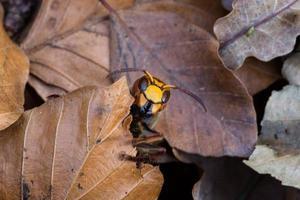 close-up de vespas foto