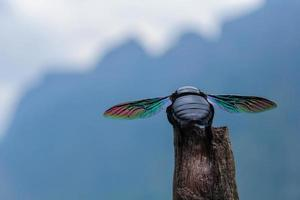 coleoptera, besouro com asas de arco-íris foto