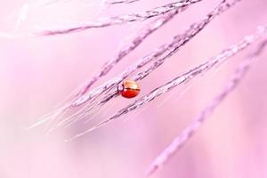 joaninha na grama de folhas foto