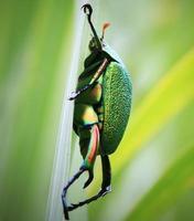 grande inseto verde foto