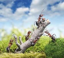equipe de formigas e árvore, conceito de trabalho em equipe foto