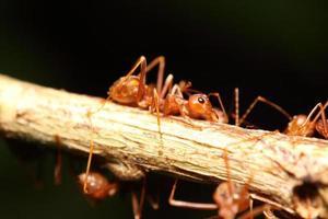 formiga trabalhando na árvore verde foto