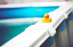 piscina de pato foto