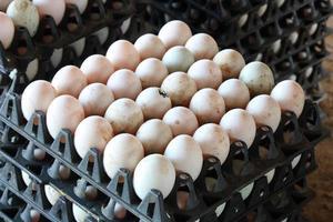ovos de pato no pacote preto foto