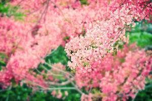 fundo de flor flam-boyant de foco seletivo
