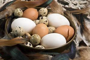ovos frescos de pato, galinha e codorna foto