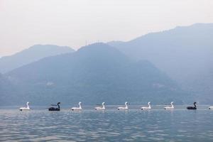 barcos de cisne foto