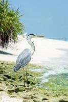 Garça na praia com palmeiras foto
