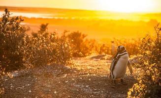 de manhã cedo em punto tombo, patagonia, argentina foto