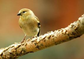 pequeno passarinho