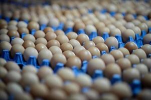 ovos da fazenda foto