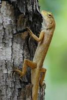 lagarto de cerca do jardim