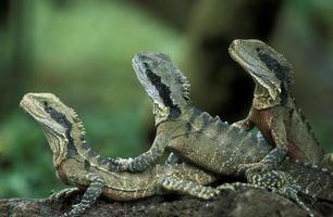 ásia bali dragão verde foto
