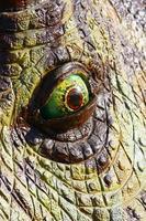 olho de dinossauro