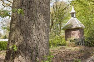 casa de pombo na paisagem da floresta foto
