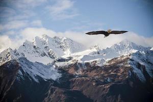 montanhas do Alasca com águia voadora. foto