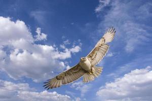 vôo do falcão foto