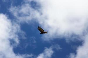 voando alto foto