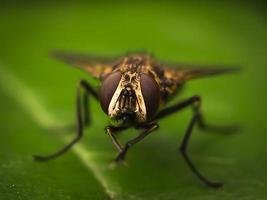 picada de mosca foto